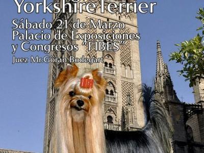 Club Español del Yorkshire Terrier